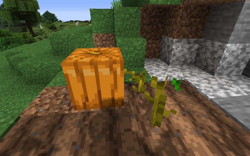 Minecraft pumpkin growing in farmland soil.